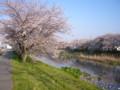 先々週の桜