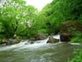 横瀬川も濁りまくり。新緑もMAX。