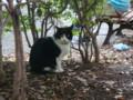 代々木公園の猫  post from DSC-G3