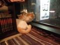 猫カフェで思い出した。俺も昨日淵野辺駅の「二階のねこ」に行ってき