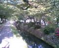 春は桜に包まれる道。・・・今年来なかったぞ!