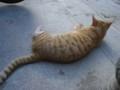 理想の猫(の画像)を発見した!このフォルム!尻尾しばしばしたい!