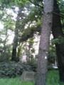 学校の林 蝉がないてます…
