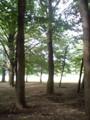 小金井公園ジョギング中
