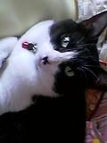 ましろさんちの猫たんもみたいお!もふもふもふもふもふもふ