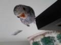 一緒に暮らすことになった鳥さんです。