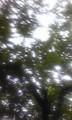 よい木漏れ日が撮れた