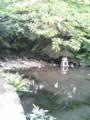 学校の池〜