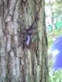 Beetles in Nagano