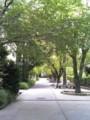 ヒマなので学校の並木路を晒す