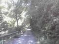 涼しっ。プチ森林浴〜