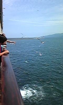 カーフェリーなう。乗船開始10分にて2等席は座る場所無し。