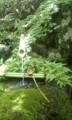 足立美術館行ったー!米の言うところのジャパニーズ庭園日本一らしい