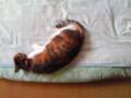 ちなみに今の猫。