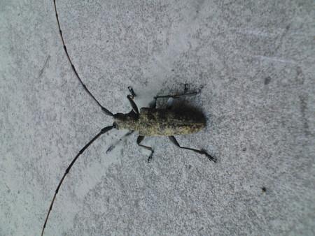 虫オンザコンクリート。これ何虫っていうんだっけ……