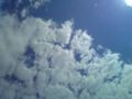 本日曇り気味
