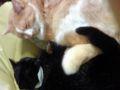 猫セラピー(*´д`*)