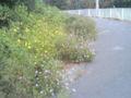 道端の花にも心癒される