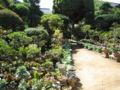 実家の庭。じいちゃんの趣味により野草で溢れています。やっぱ原町は