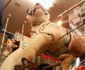 白豹カッコいい。ドン・キホーテなう。