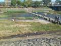今日の鴨川・飛び石。気持ちの良い休日です。