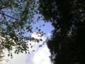空が綺麗だなー(ゴロリ
