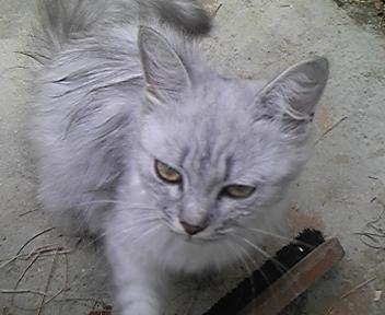 猫のミミちやんです。