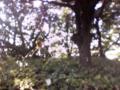 若洲公園の蜘蛛いっぱい