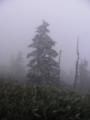 霧氷なう@日本国道最高地点