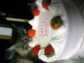 今度は投稿出来たかな!?妹と母の誕生日ケーキと一緒に にゃんこも撮