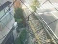 (虫注意)最近ボクの部屋の窓(外)に同居してる蜘蛛さん!