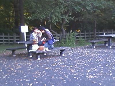 犬を公園のテーブルの上に座らせるのはやめましょう。