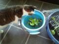 とうとうサラダさんが金魚に気付いて金魚すくいを出しはじめ ました