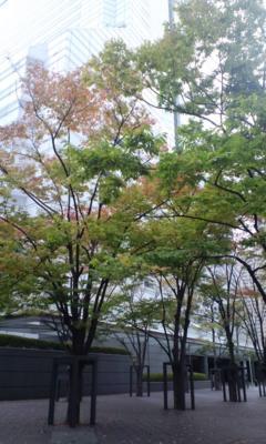 三田。慶応まで行ってきます。やっと紅葉くさいね。