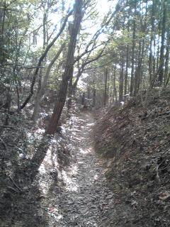 トレラン #jog #run_jp #2289nrf