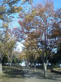 入船公園。葉の色づきはぼちぼち。