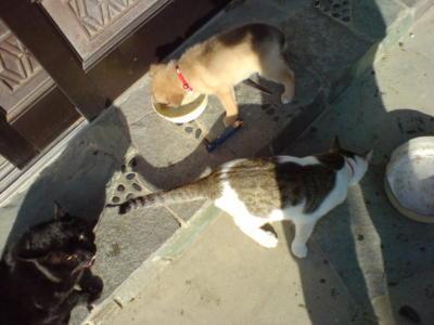 猫と猫と猫の首輪をした犬と。