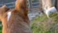 そして 河原では、ジャックラッセル界の有名犬に会ったぞ!さぁ誰だ