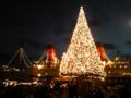 シーのクリスマスツリー