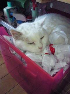 すなむくが15年前に拾った猫