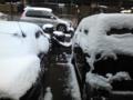 あら初雪in名古屋