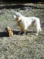うちの犬は便利です。小型犬の重しに…。