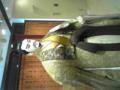 初売りから寄り道して地元の川本喜八郎人形美術館へ。川本喜八郎は昔