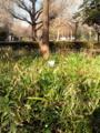 日比谷公園でひなたぼっこしている猫