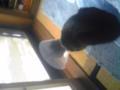 窓を覗く猫。かわいいです。