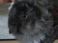 寅年の今年、我が家の寅みたいな?猫も役に立つだろうか?#tsukirininfo