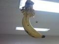 バナナ吊した。 さすが島バナナ。戻ってきたら残り1本だった。もち