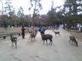 めがっさ鹿