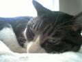 【今日の猫】くう(9歳♂)顔が邪悪。