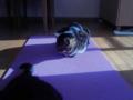 【今日の猫】わらび(4歳♂)なつめのしっぽが気になっている